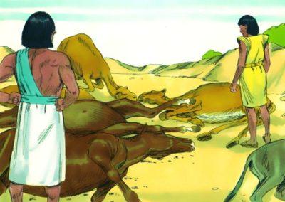 The Fifth Plague – Death of Livestock -Exodus 9:1-7