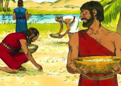 Heavenly Provision – Manna and Quail